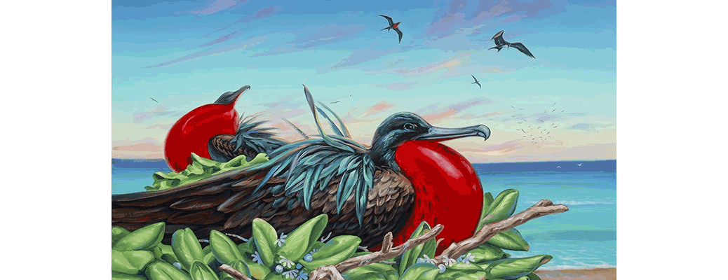 Iwa Roost By Patrick Ching - frigate birds build their nests